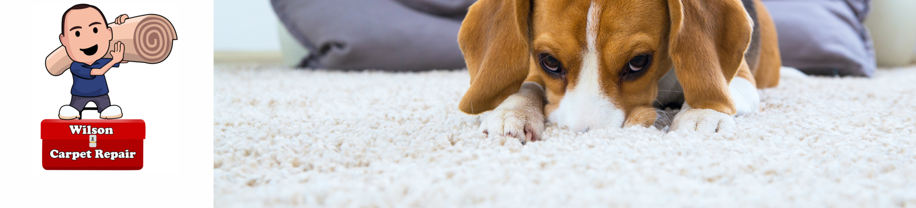 Dog on new carpet installation by Wilson Carpet repair